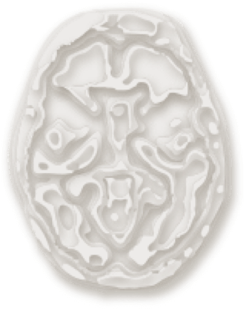 Brain with a cross-sectional view from the bottom-up